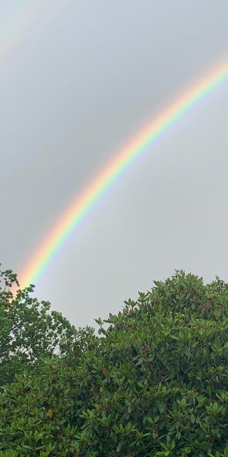 Regenbogen - 1
